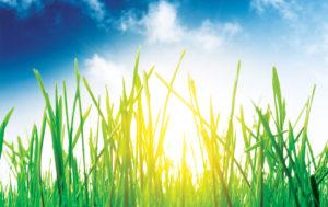 ziontific summer solstice music festival vermont