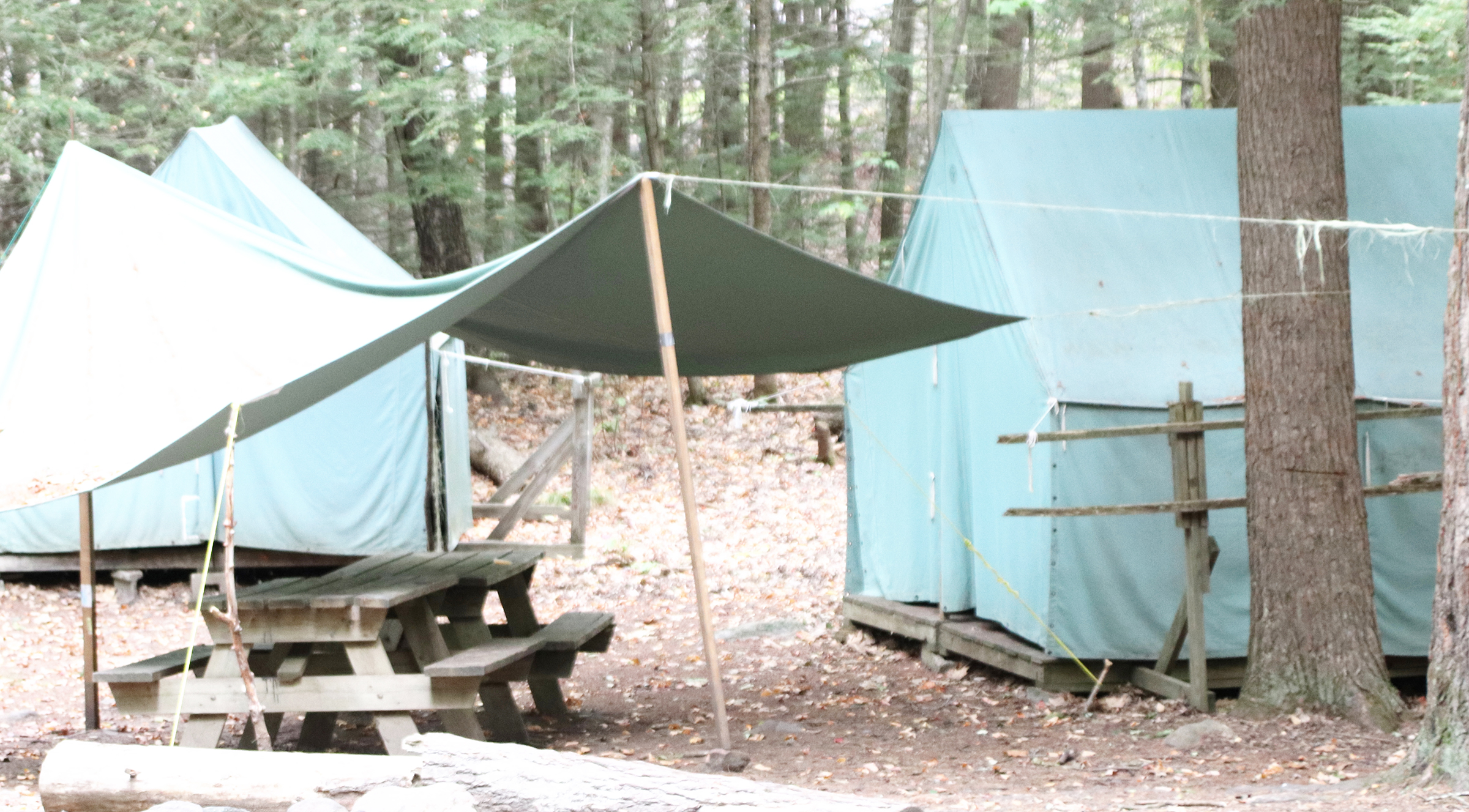 Canvas Tents in a woodsy location. & ZIONTIFIC 2018 Canvas Tent (2 beds) u2014 ZIONTIFIC Summer Solstice ...